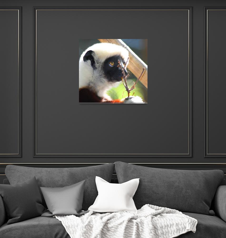 """Lemur""  (2012) by kenrainwaterphotography"