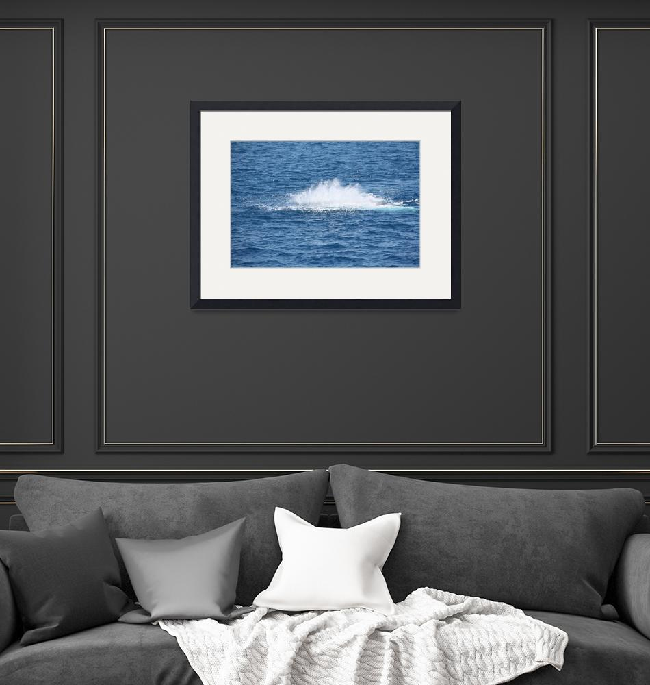 """""""NaP_ Whale Watching119""""  by nevilleprosser"""