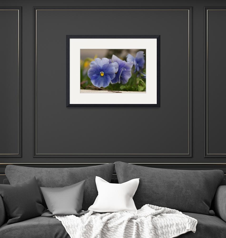 """""""pansy""""  by griannan"""