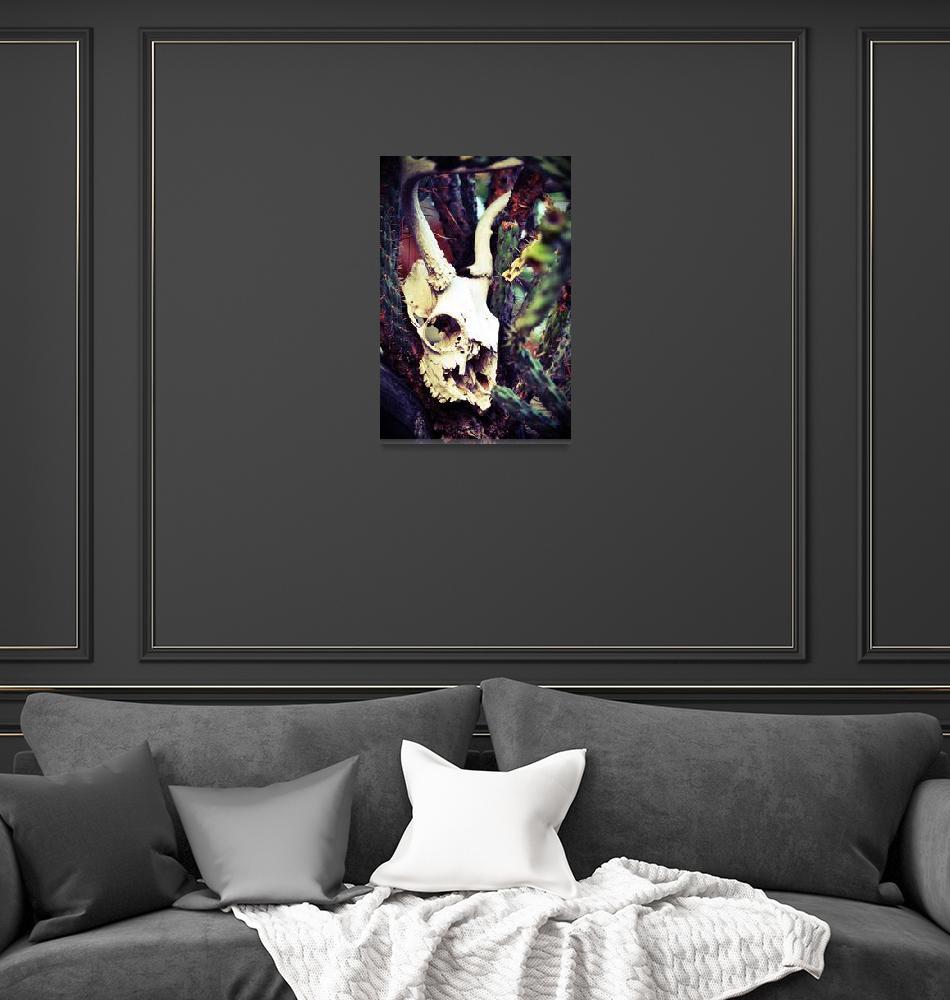 """Jack Rabbit""  (2014) by KatCrowPhotography"
