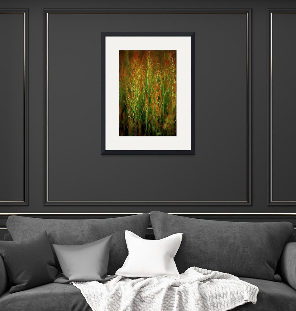 """""""Red Flower Grass in Prairie"""" by jimcrotty"""