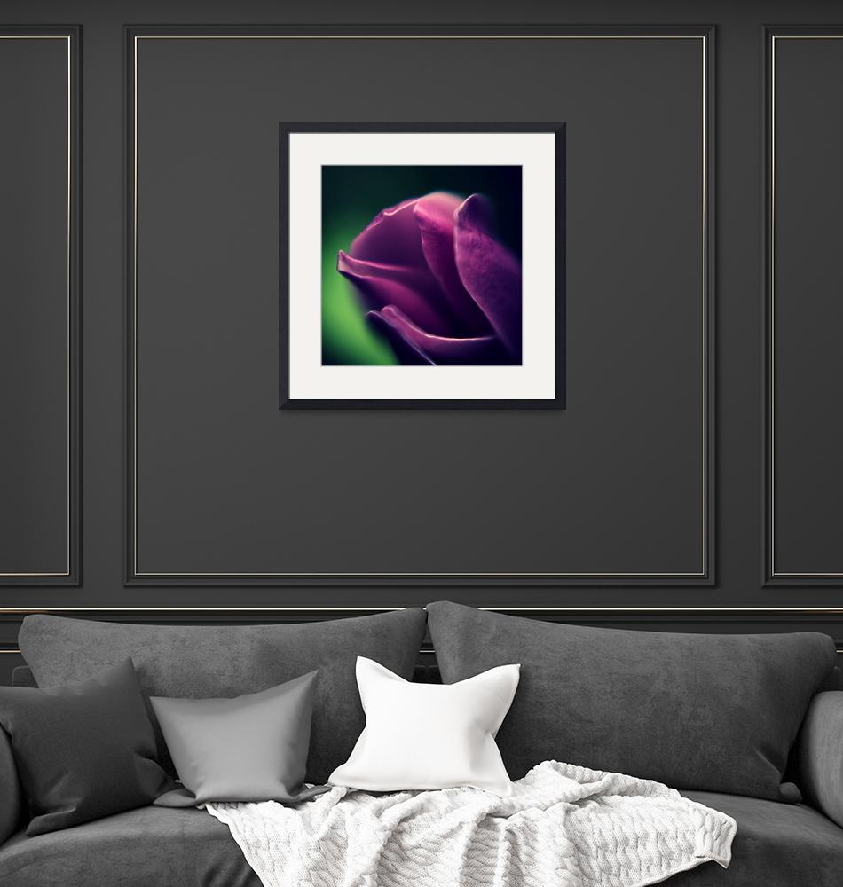 """""""Magnolia Bud""""  by Mike_Bartley"""