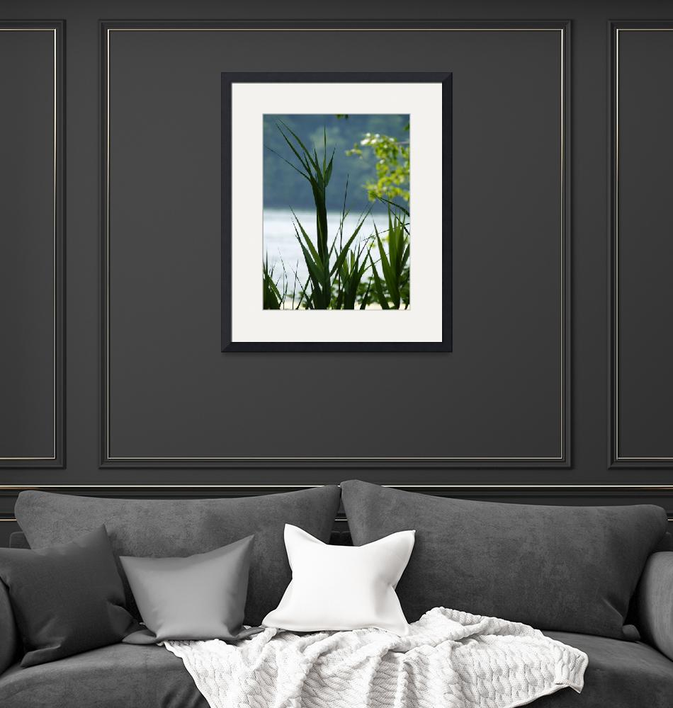 """""""Plant Life Along A Lake""""  (2010) by MikeMBurkeDesigns"""