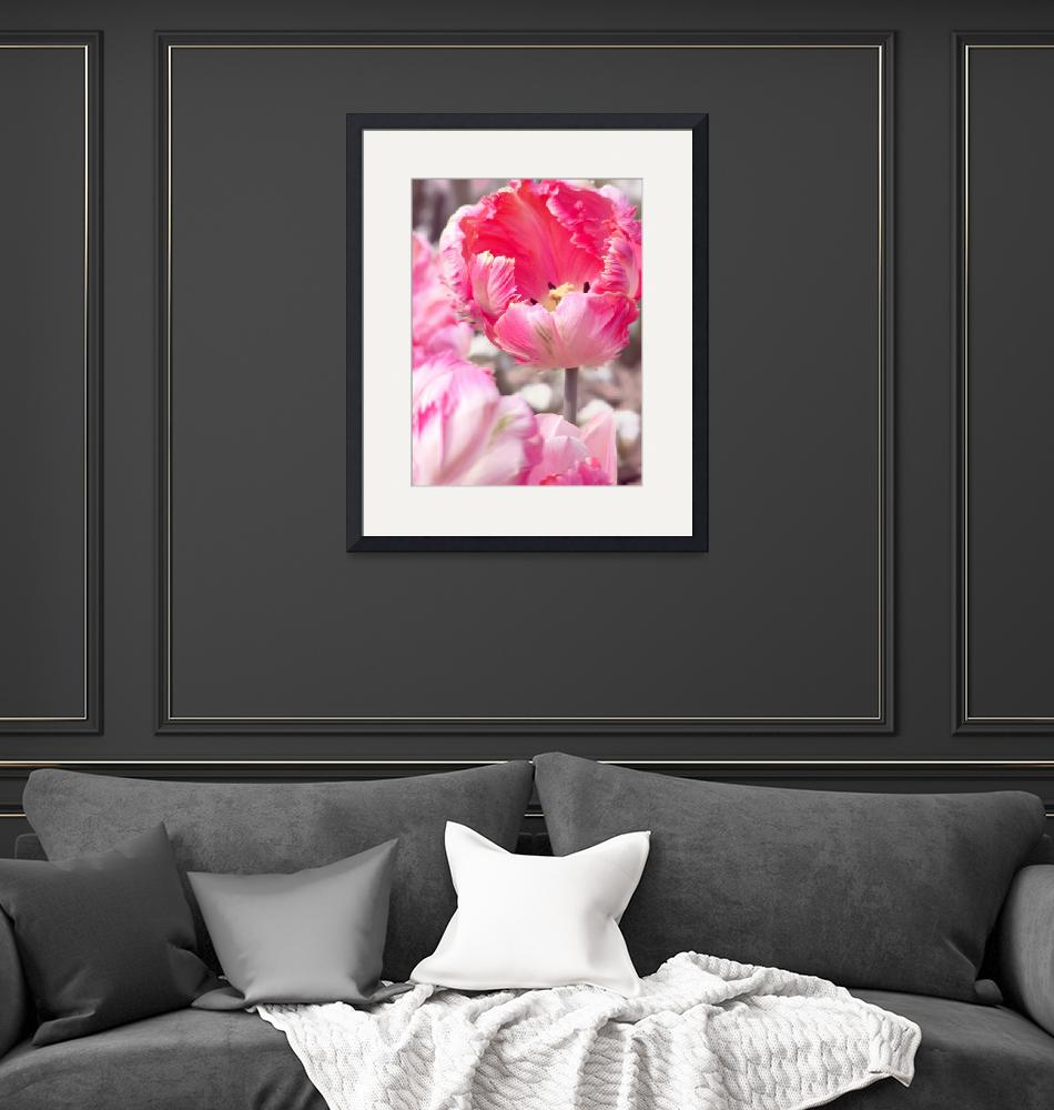"""""""Fancy Frills Tulip""""  (2010) by fizzyimages"""
