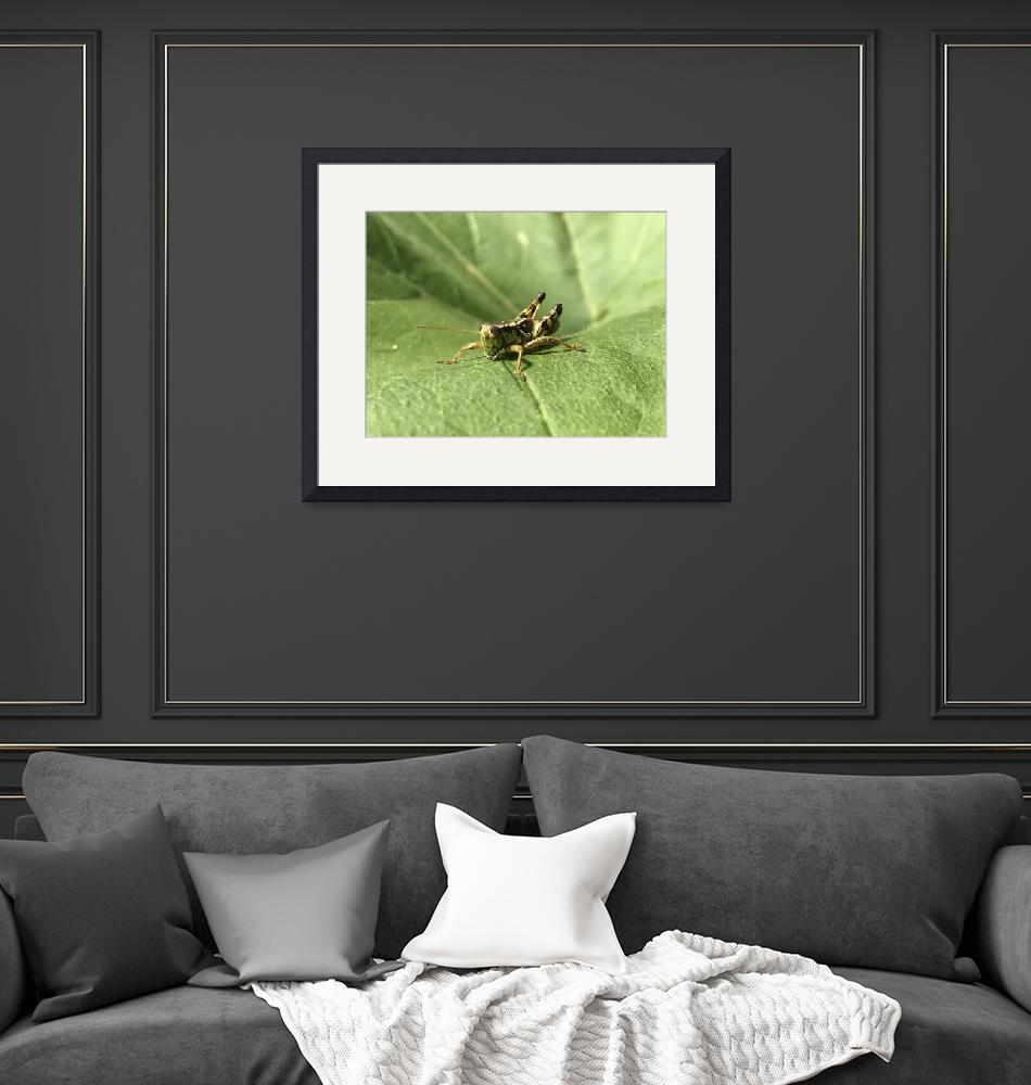 """""""Grasshopper""""  (2017) by EnghPhotography"""