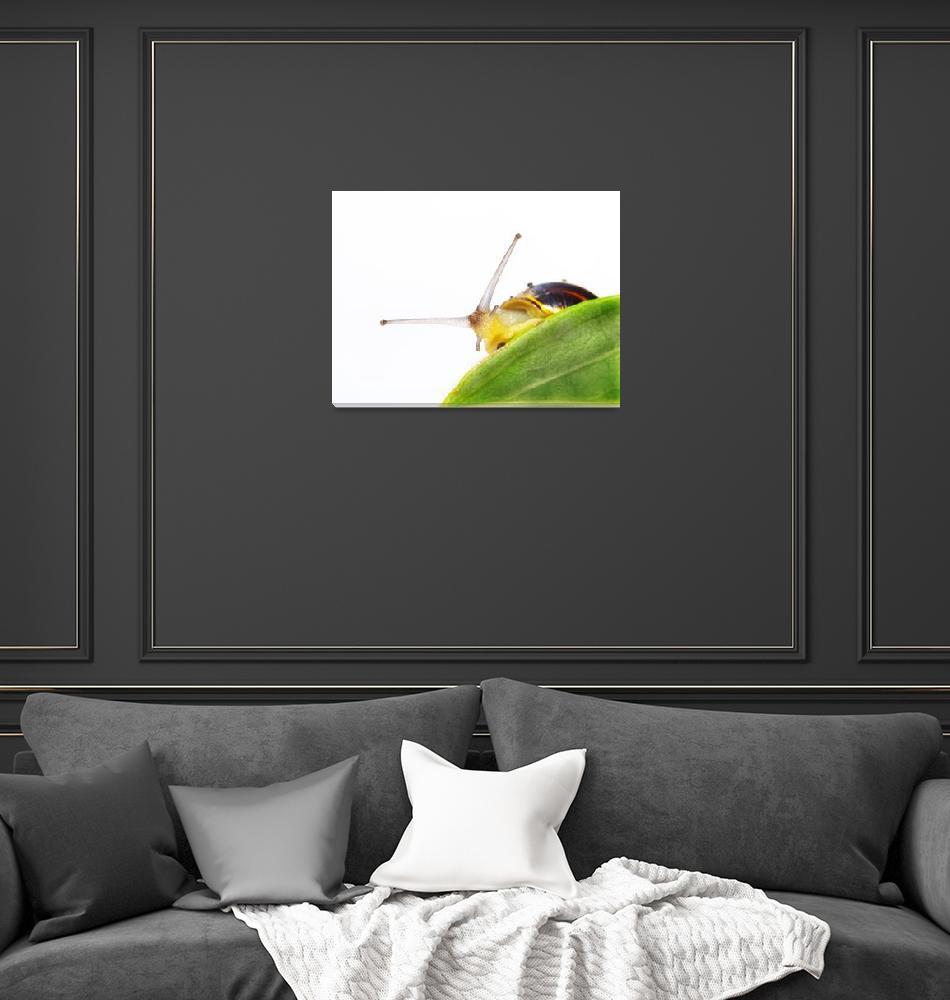 """""""snail on a leaf""""  (2009) by derausdo"""