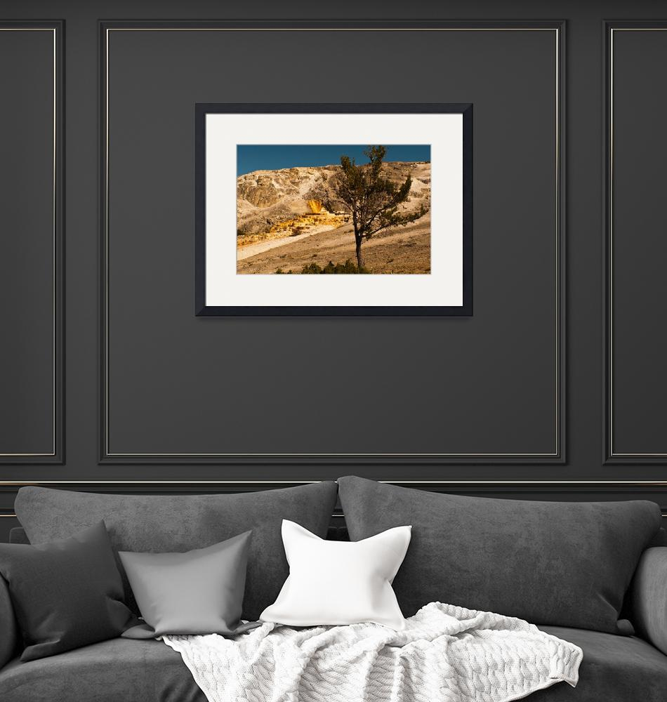 """""""Lone  tree at Mammoth""""  (2012) by jorgy"""