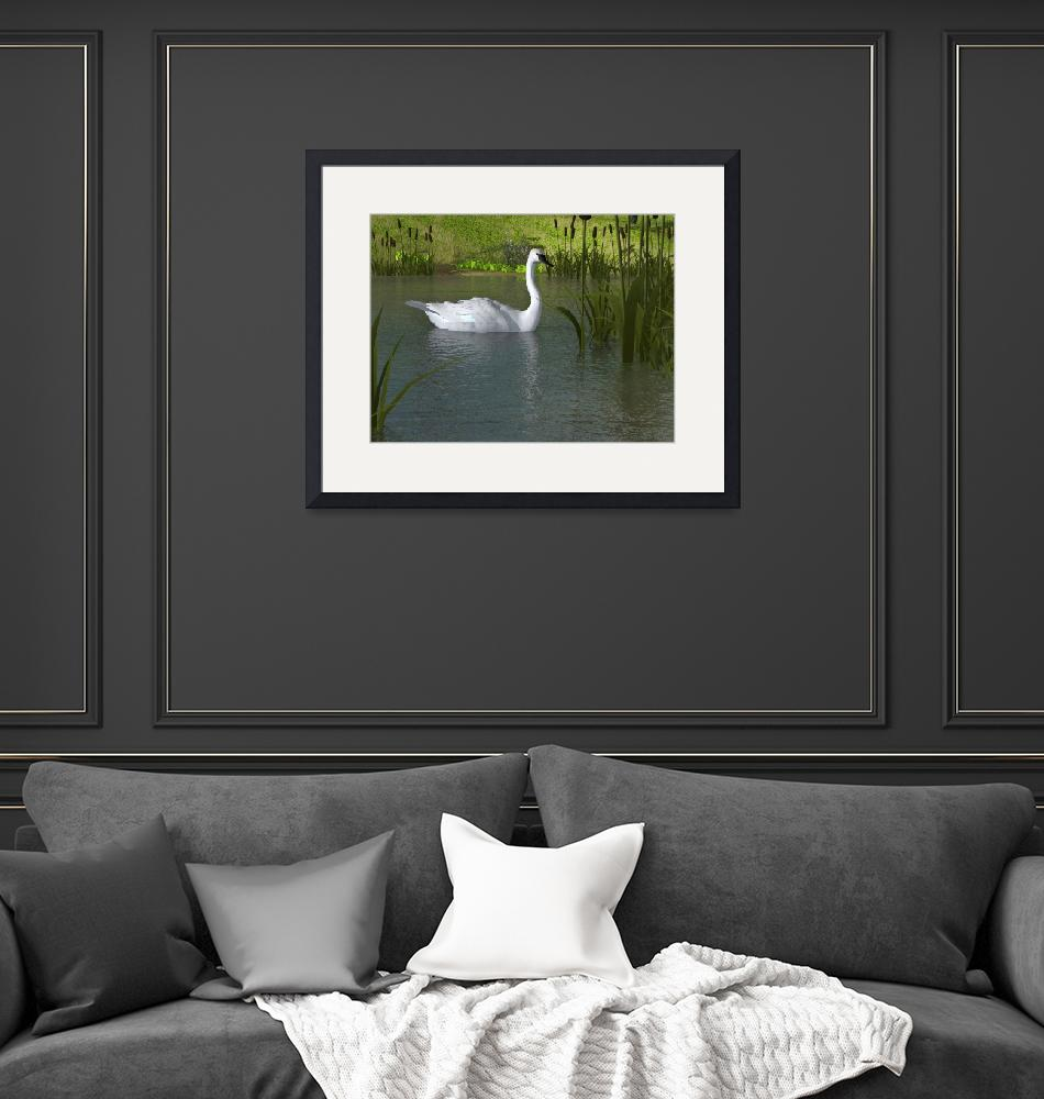 """""""Swan on Water"""" (2014) by walbyent"""