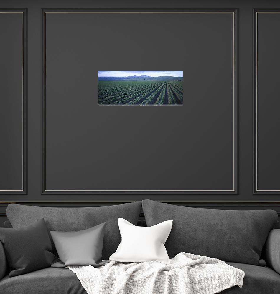 """""""Crops in a field""""  by Panoramic_Images"""