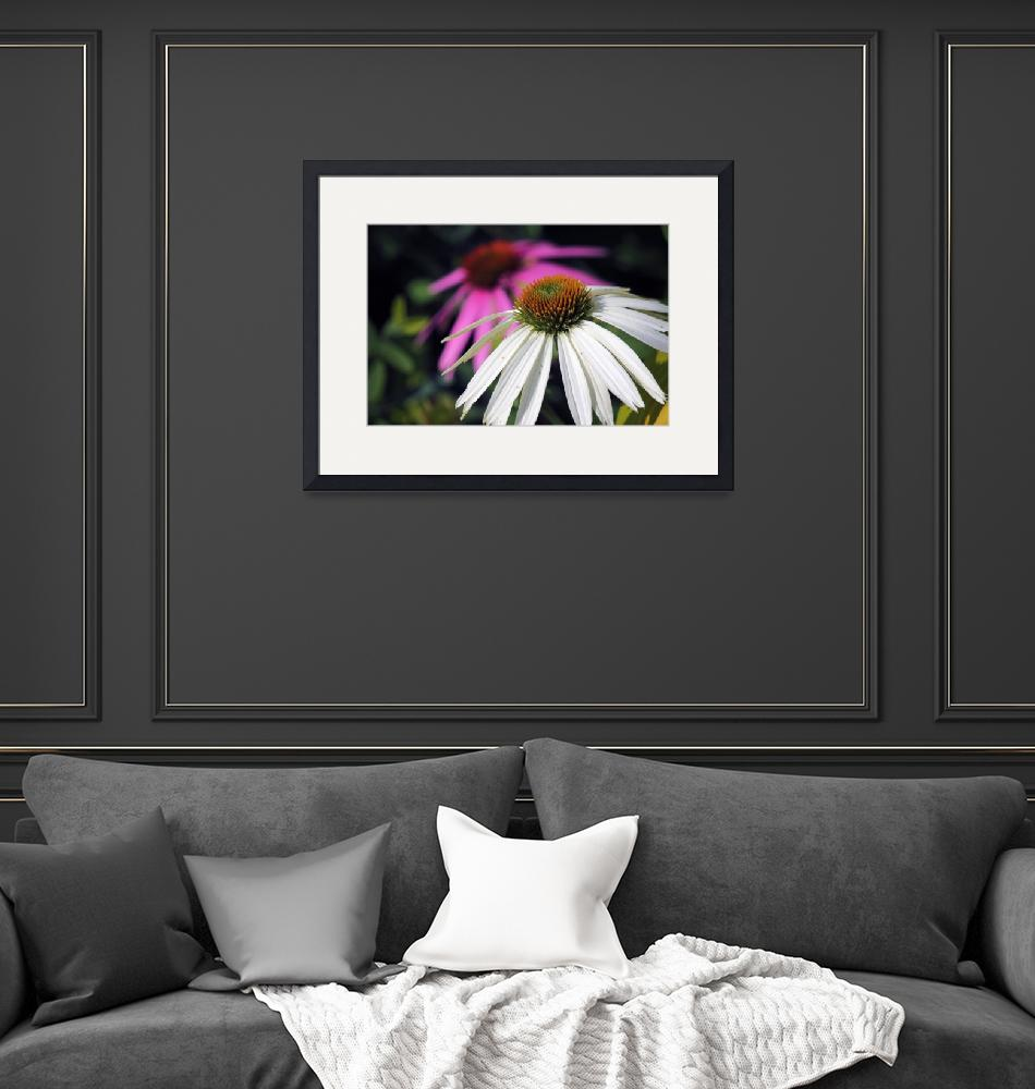 """White Coneflower""  (2013) by athompson"