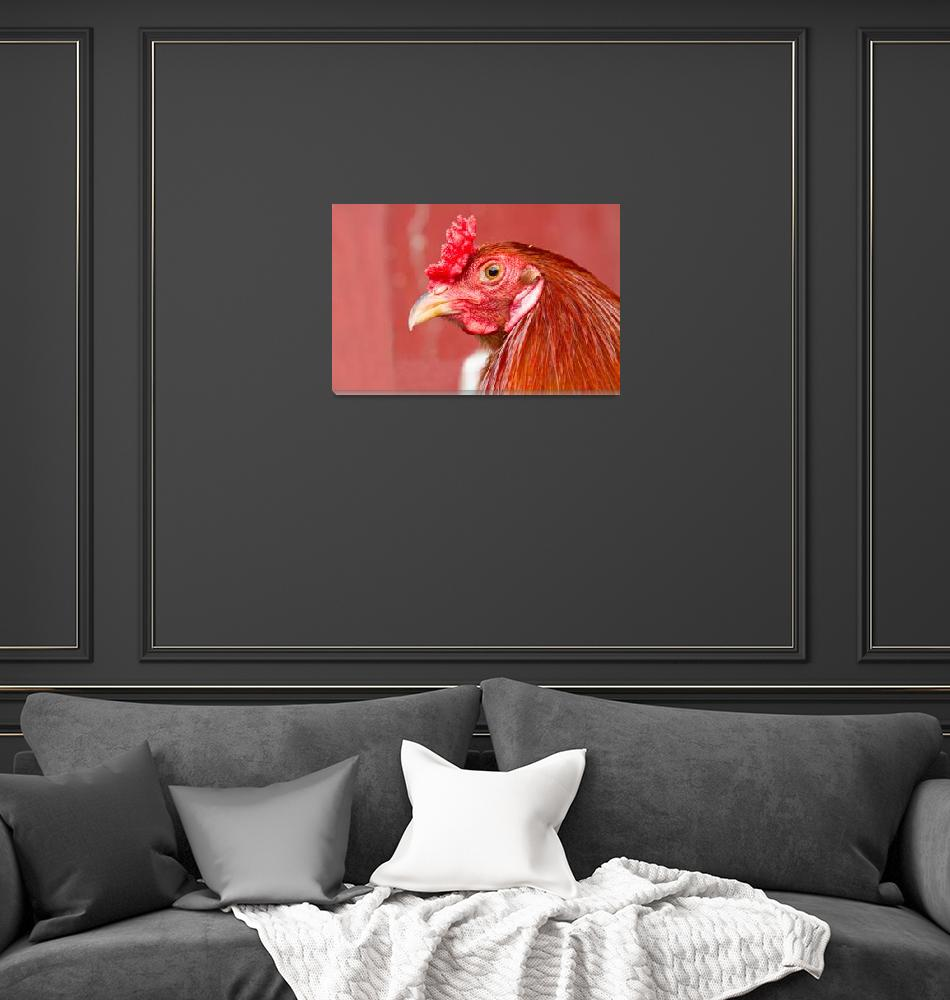 """Rooster Close-Up on Red""  (2011) by lightningman"