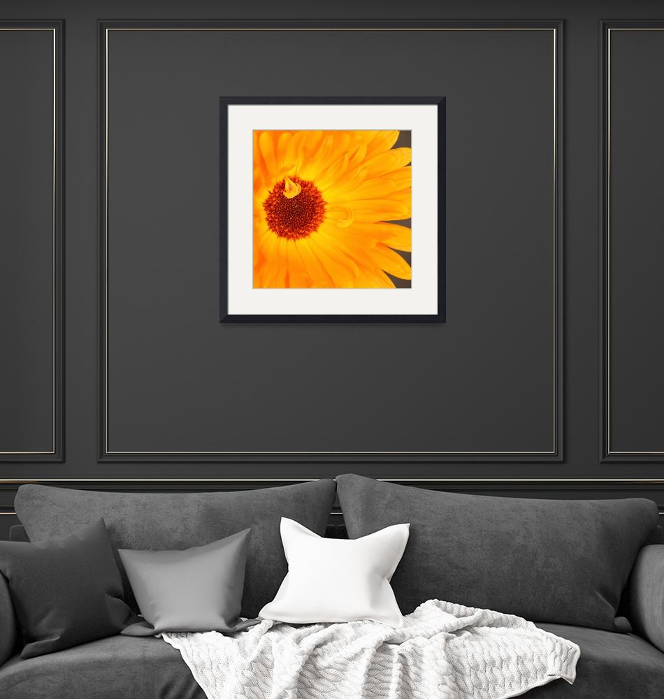 """Sunny Flower Heart""  (2012) by SYoungPhotography"