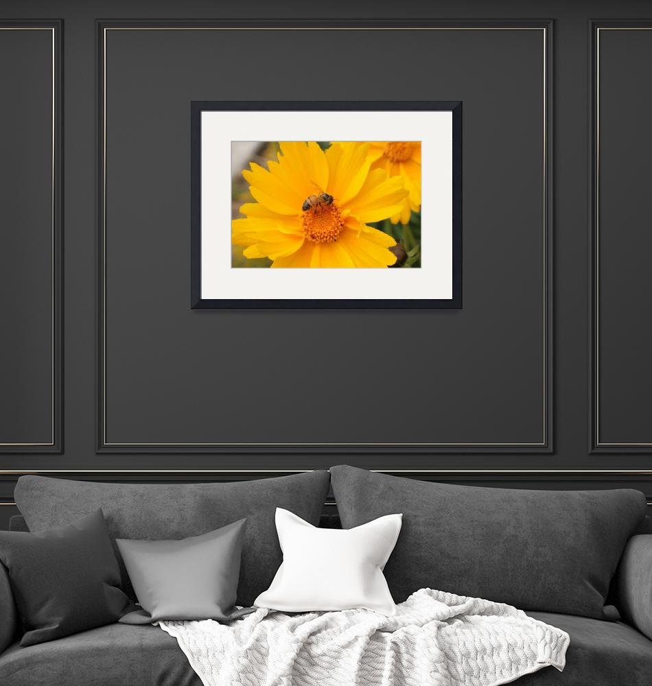 """""""Bee Pollinating Yellow Flower""""  (2014) by rhamm"""