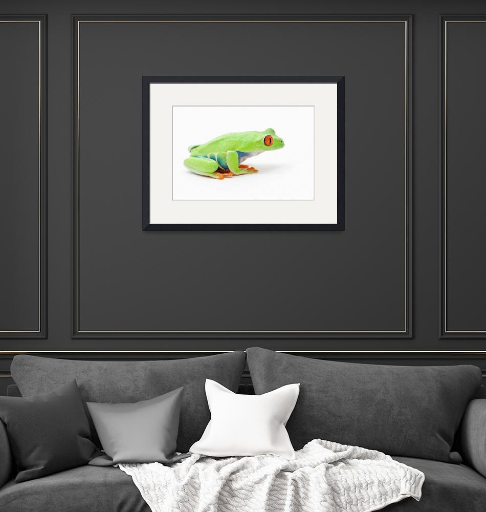"""""""Red-Eyed Tree Frog""""  by DesignPics"""