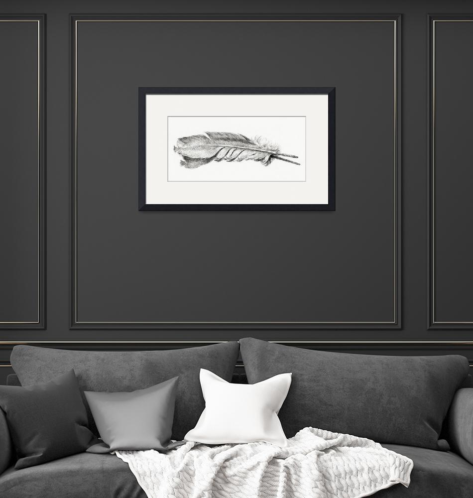 """""""Vintage Feather Etching""""  by FineArtClassics"""