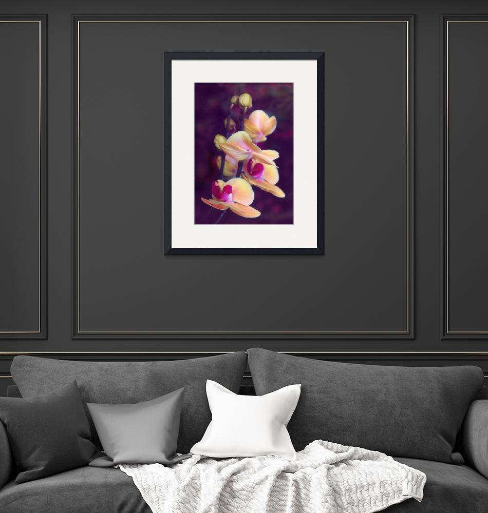 """""""The Elegant Orchid""""  (2018) by JessicaJenney"""
