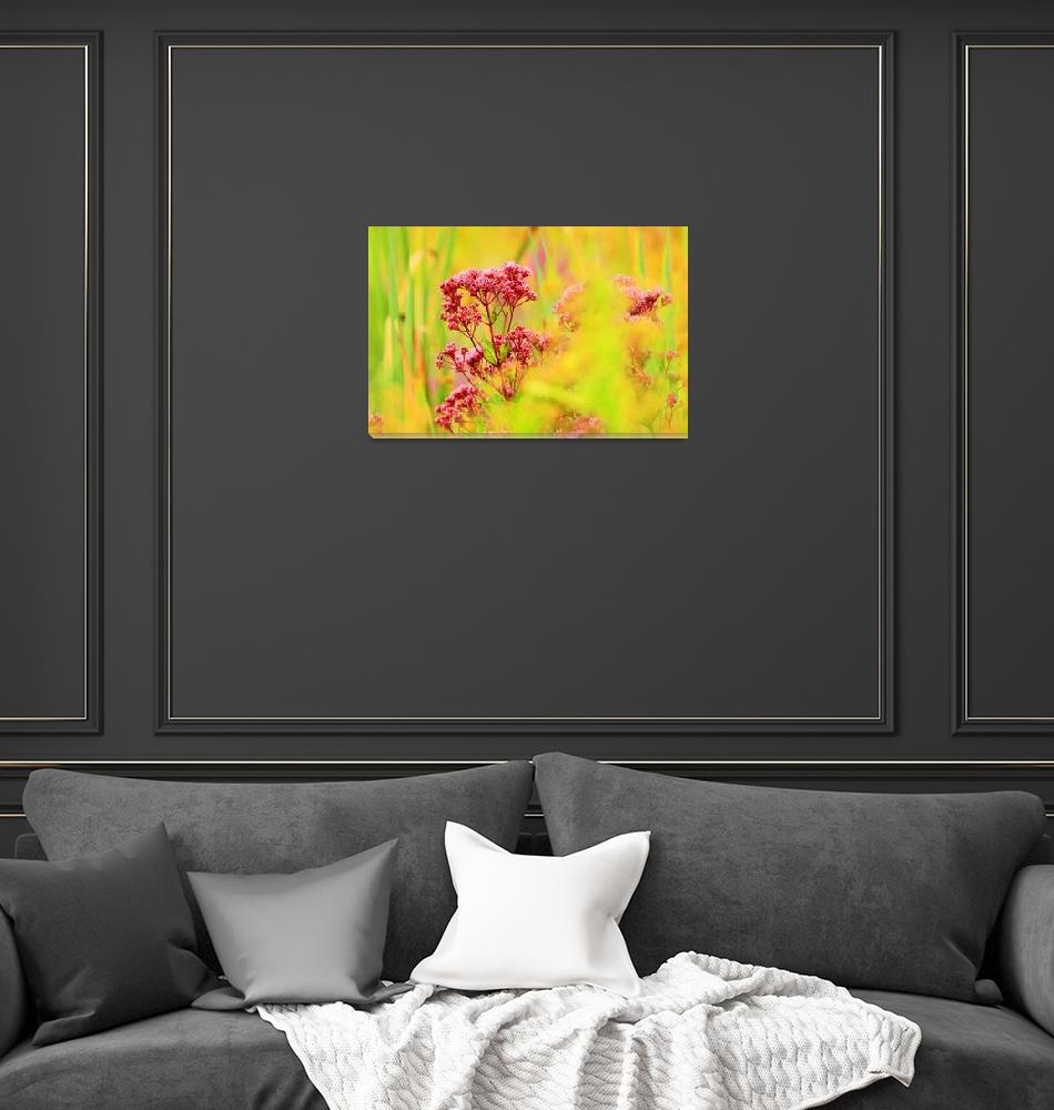 """Summer Colors""  (2012) by shelshots"