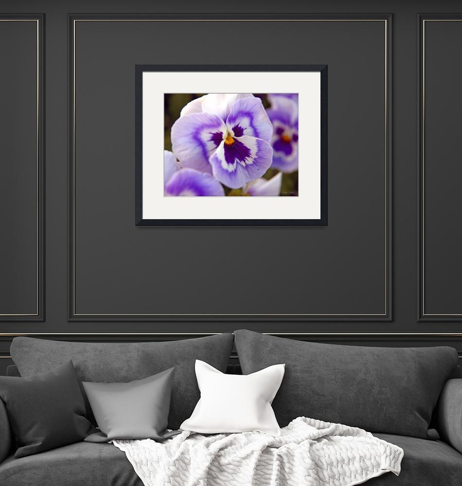 """""""Pretty Pansy""""  (2008) by daisyjoan"""