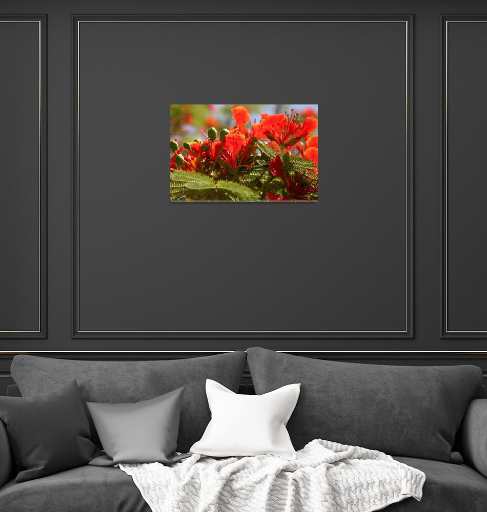 """""""Flame Tree Blooms 2""""  (2009) by DonnaCorless"""