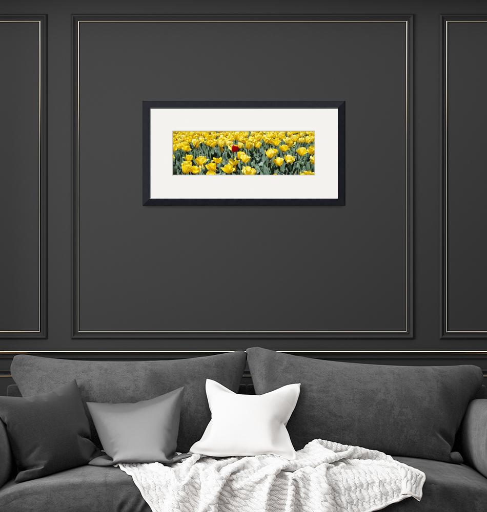 """""""Tulips""""  by Panoramic_Images"""