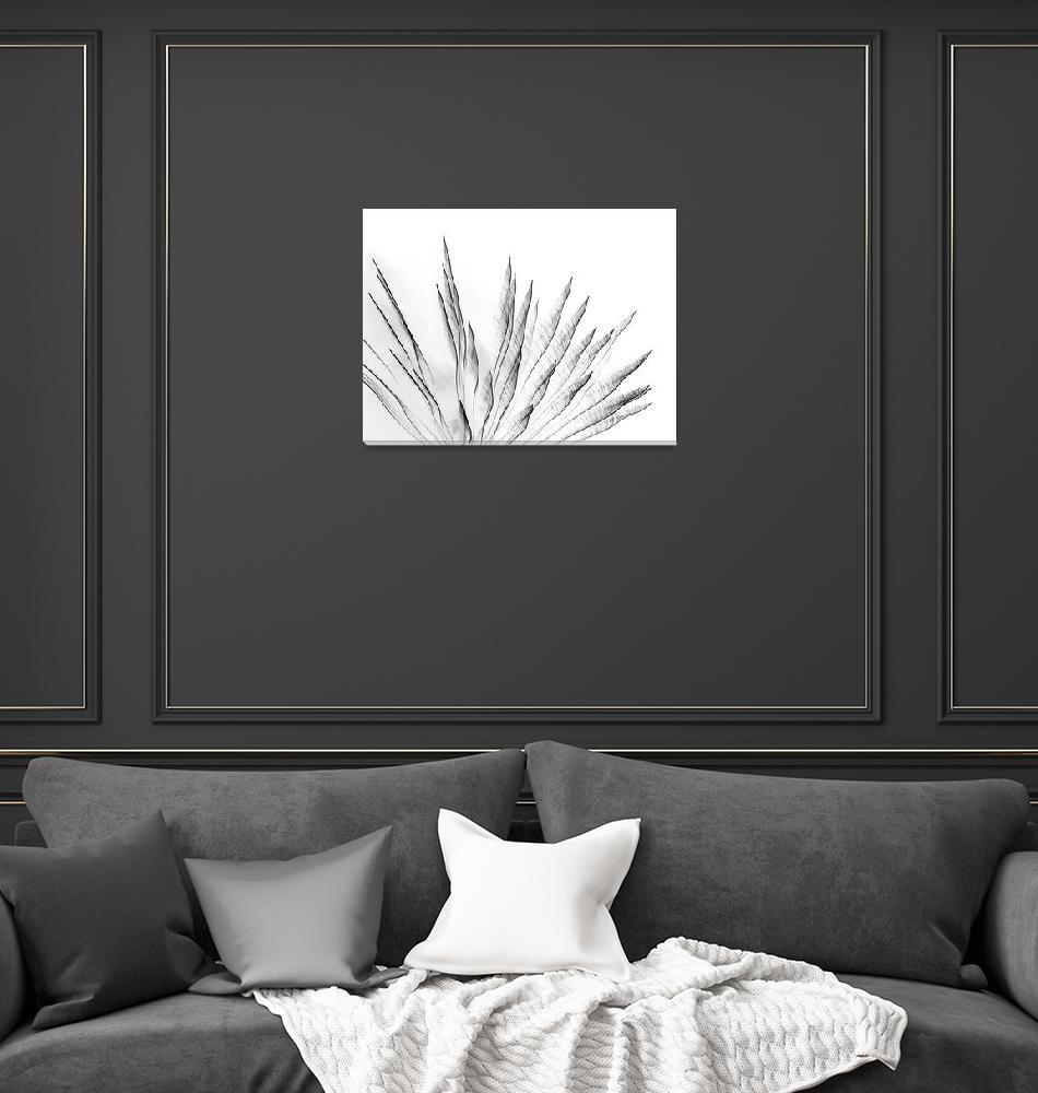 """""Snake Plant"" Black on White""  (2015) by joegemignani"