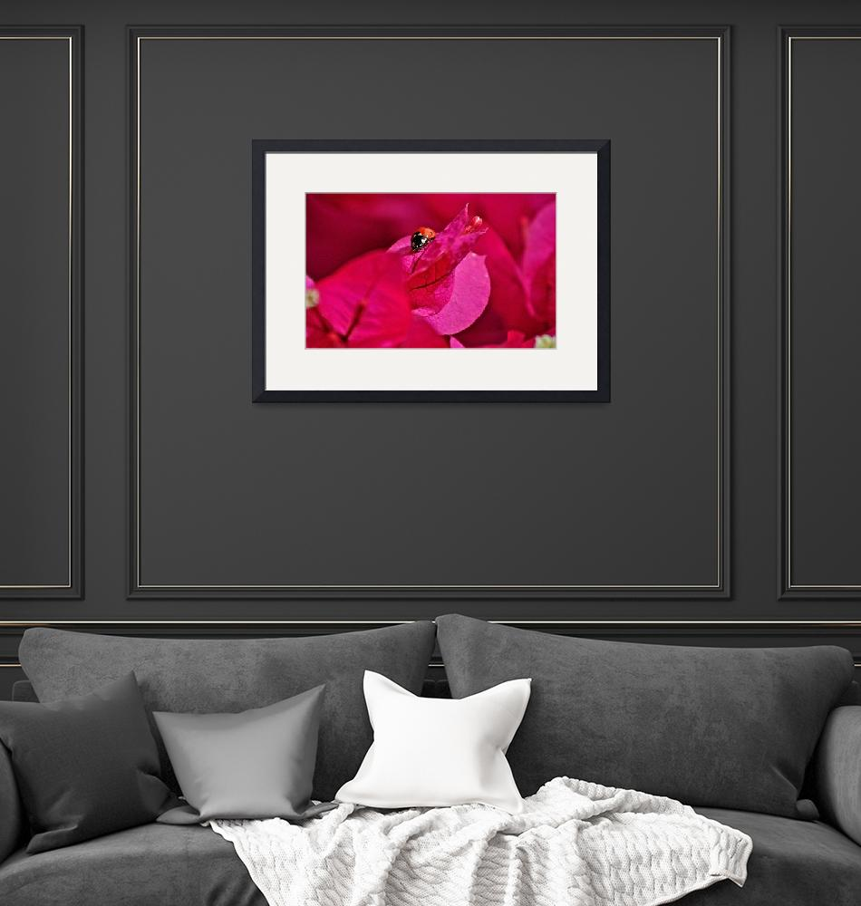 """""""Pink Lady""""  (2010) by Photofilly31"""
