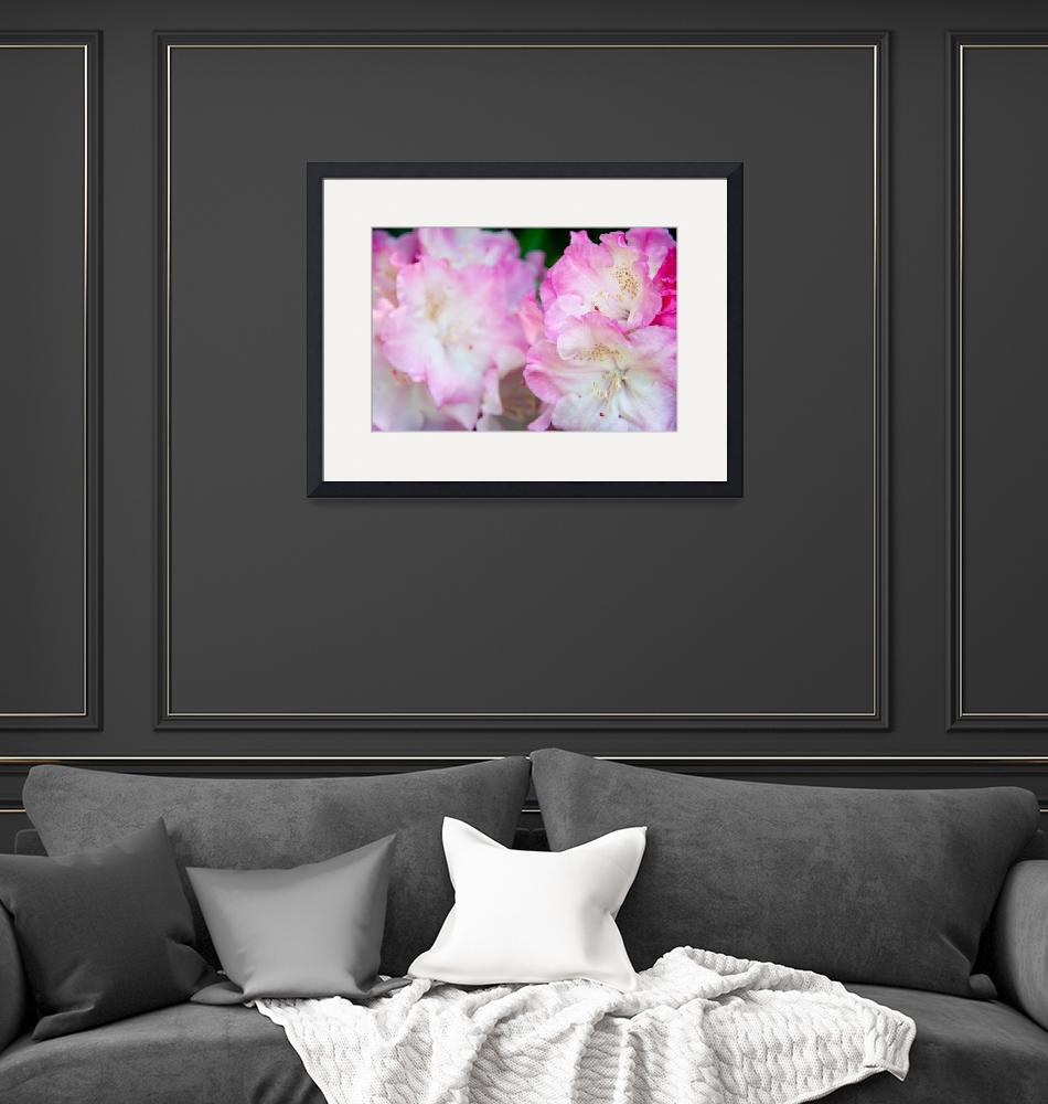 """""""Rhododendron""""  (2011) by AnnG"""