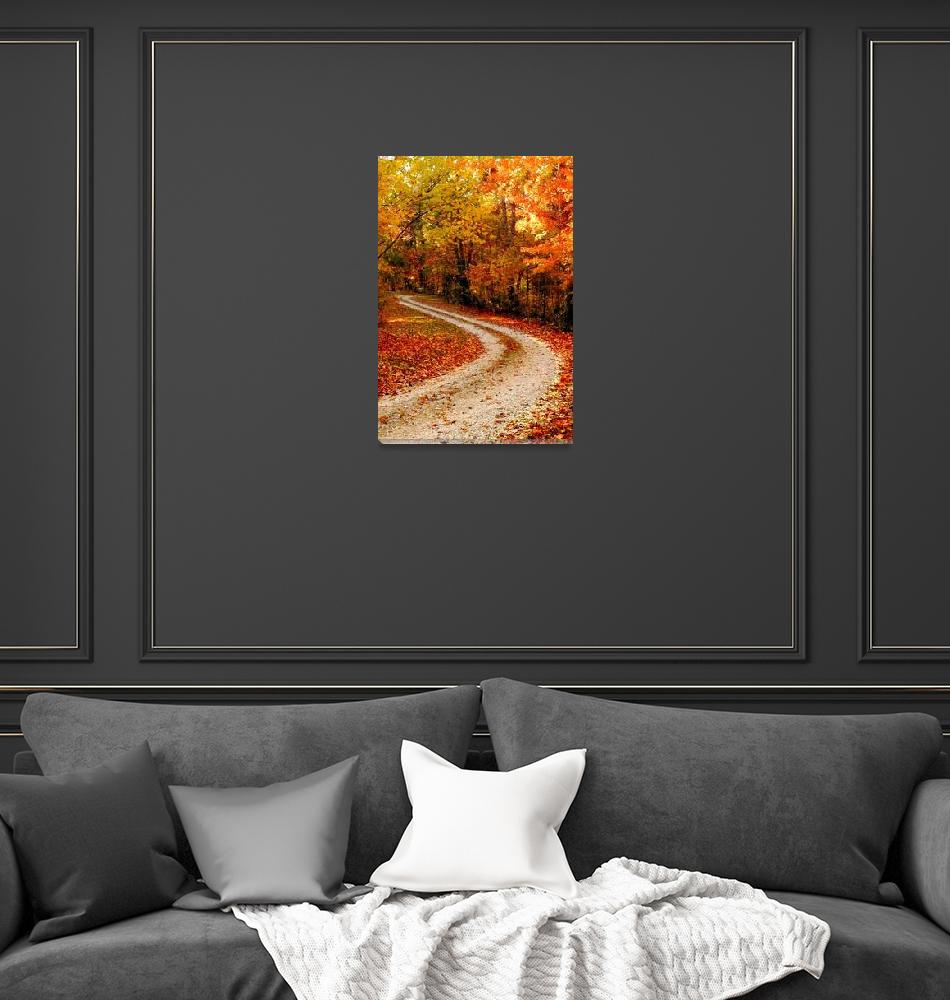 """""""The winding road""""  (2007) by amymillerphotos"""