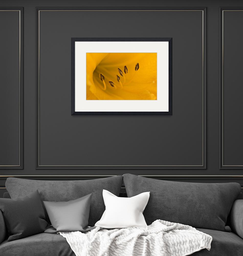 """""""Yellow Lily""""  (2010) by MindsEyeImagery"""