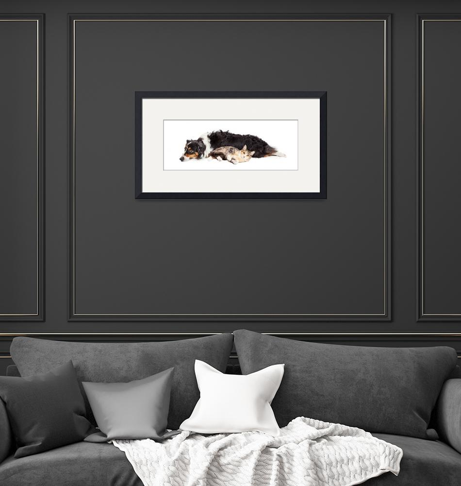 """""""Australian Shepherd Dog and Cat Laying Together""""  (2016) by ADogsLifePhoto"""