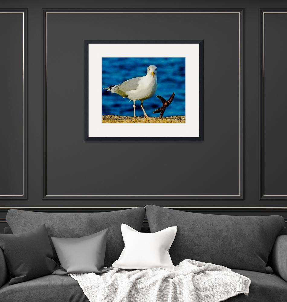 """""""Dance with the Seagulls""""  (2012) by PhotographsByCarolFAustin"""