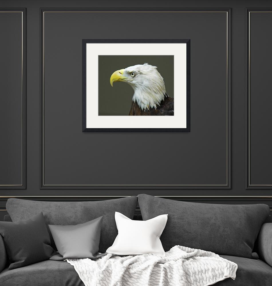 """""""Bald Eagle""""  (2007) by tricia"""