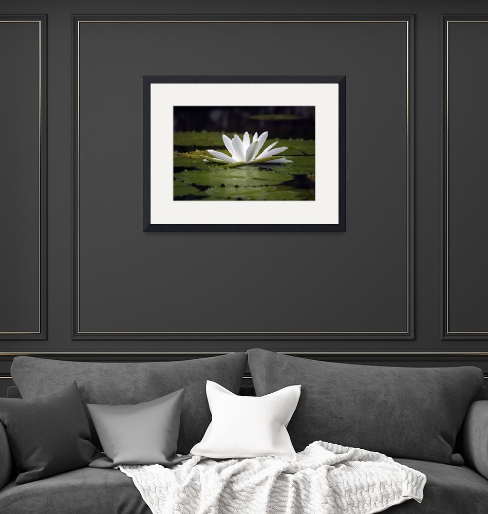 """""""waterlily""""  by jolee6"""