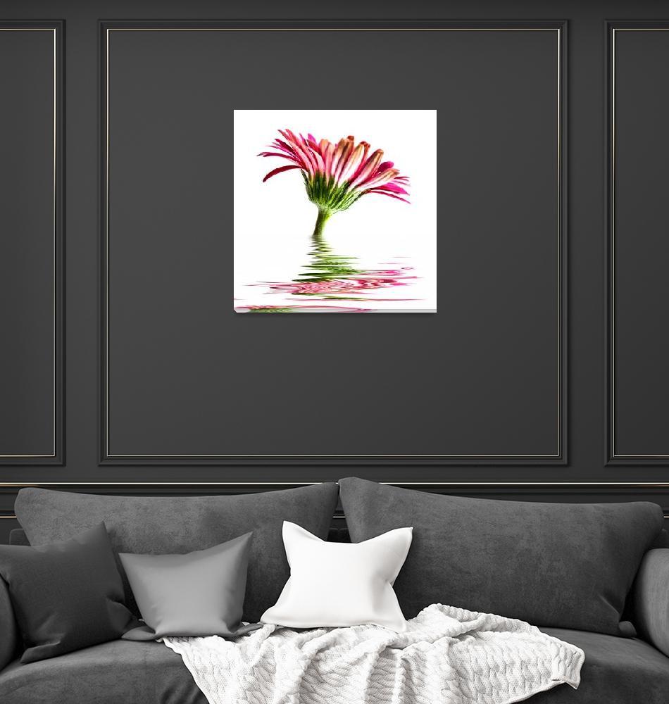 """Pink Gerbera Flood""  by StevePurnell"