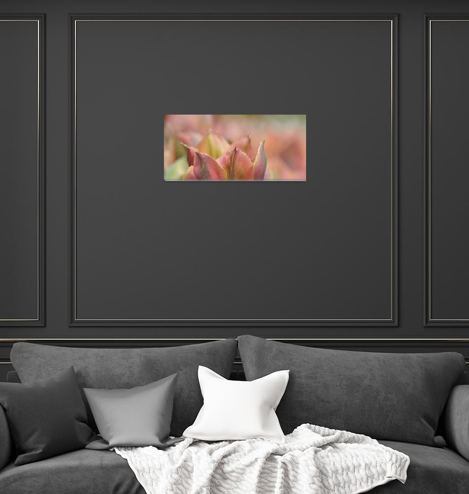 """Artist TulipScape""  (2012) by CoraNiele"