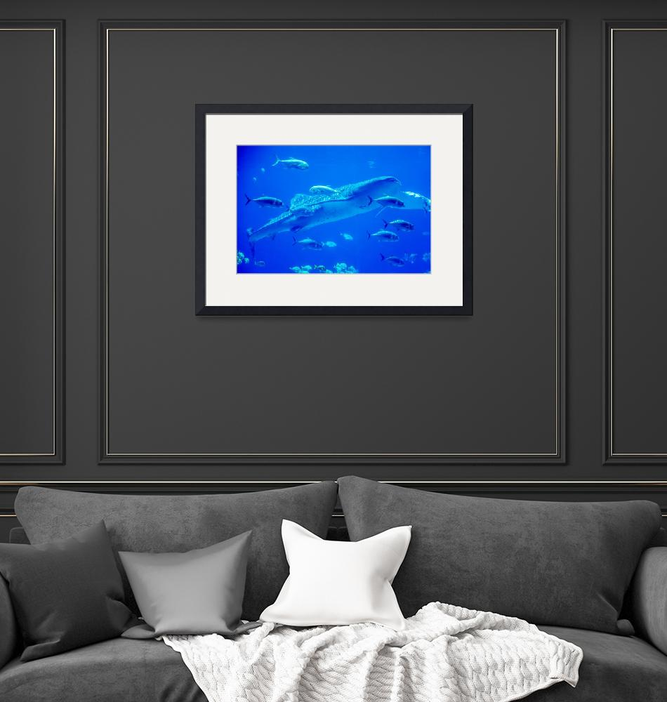 """""""whale sharks swimming in aquarium with people obse""""  by digidreamgrafix"""
