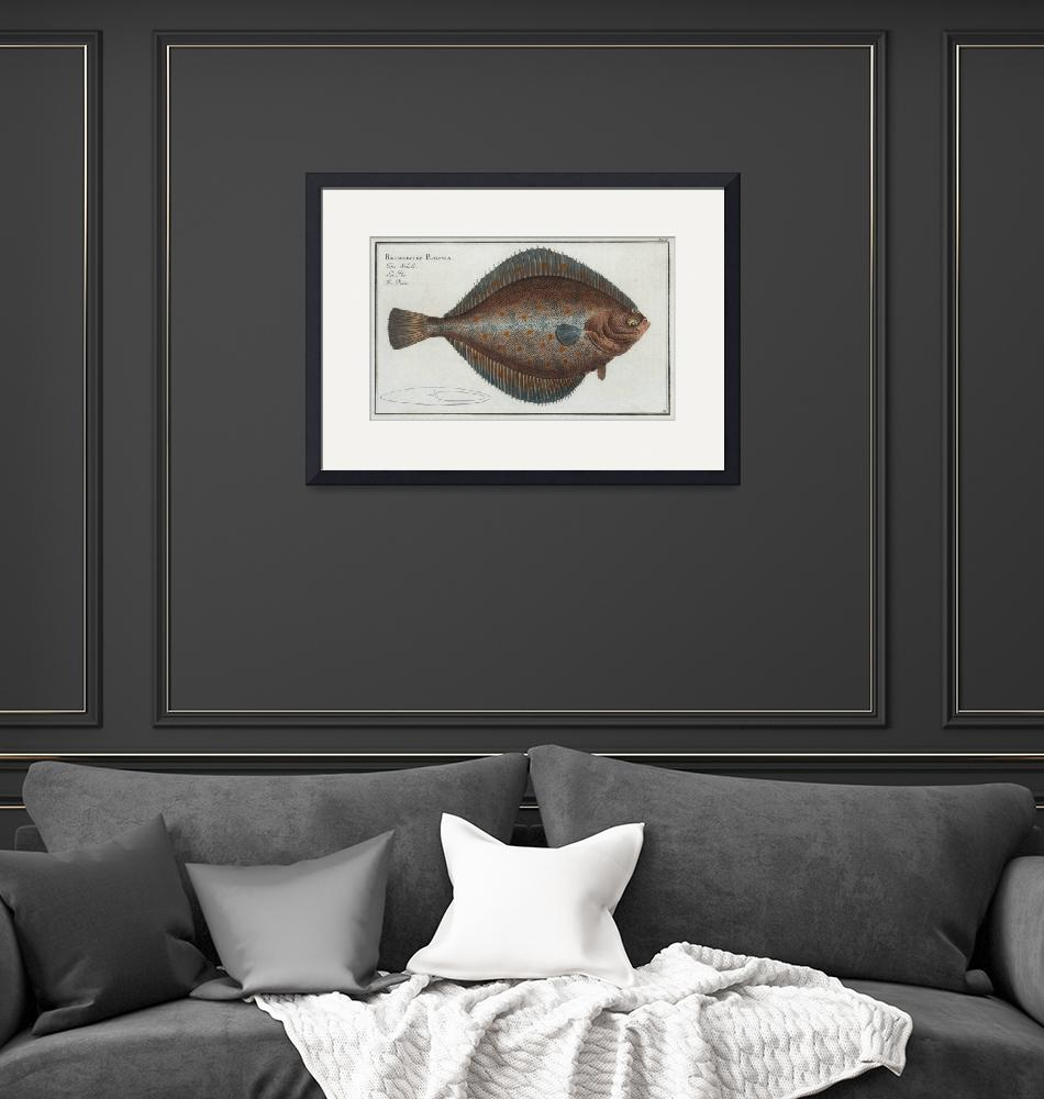 """""""Vintage Illustration of a Flounder Fish (1785)""""  by Alleycatshirts"""