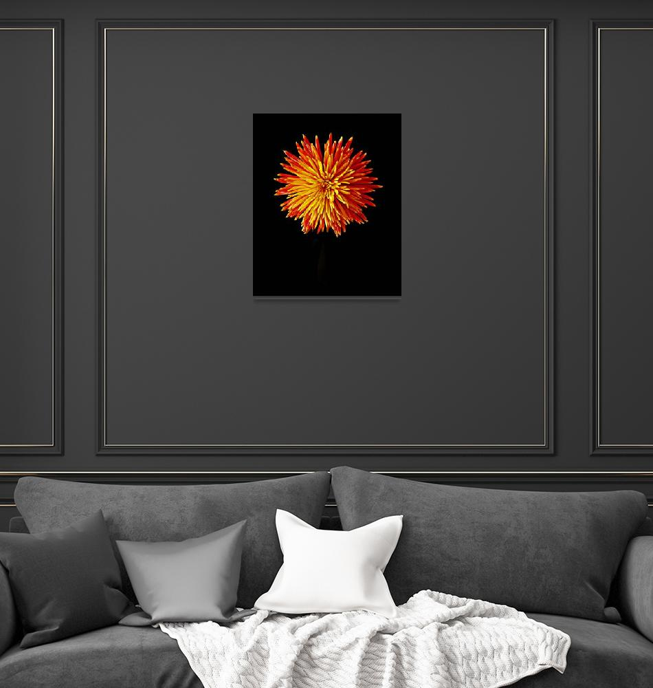 """Firework Chrysanthemum""  (2010) by aroundtheisland"