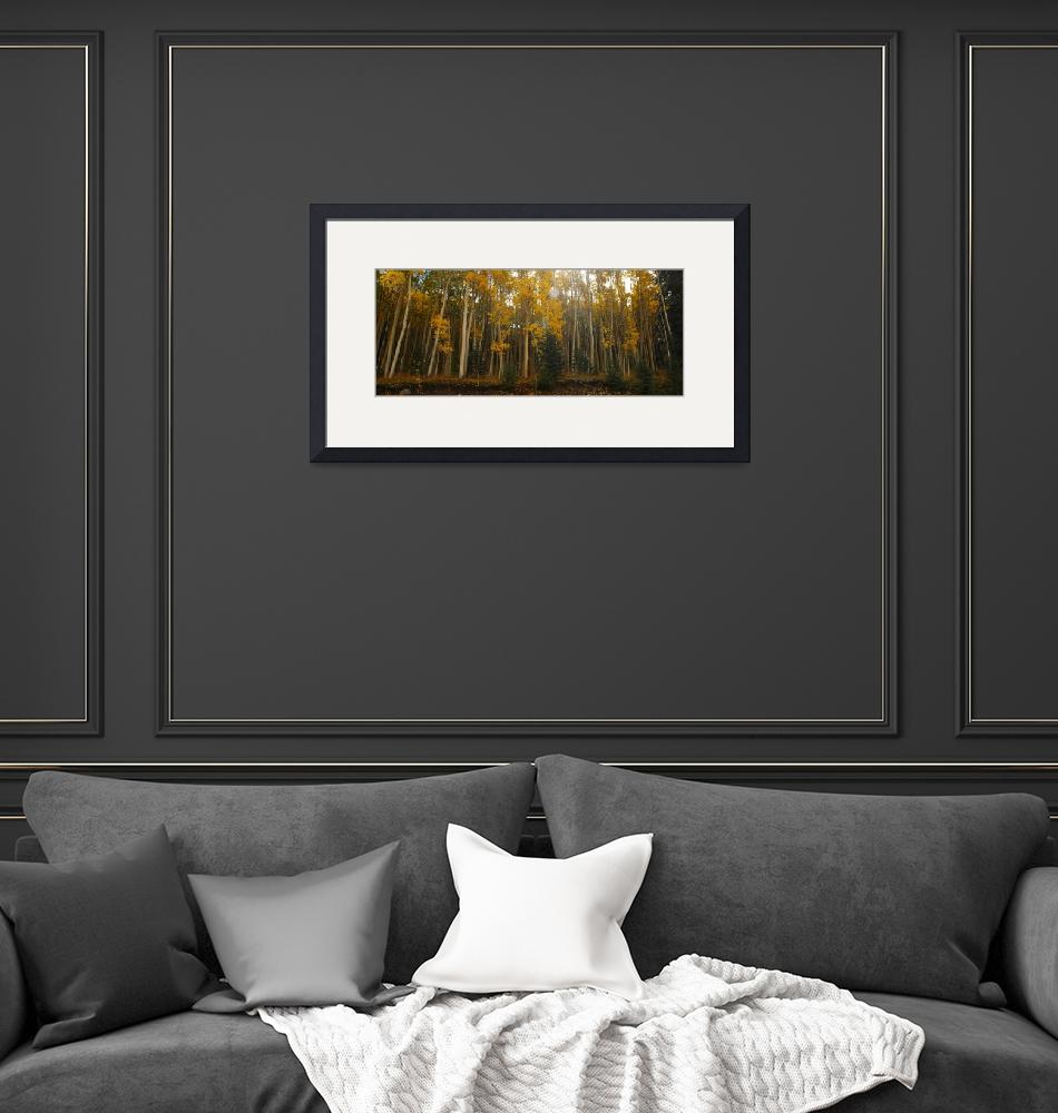 """""""Aspens at Attention""""  (2008) by jwoodphoto"""