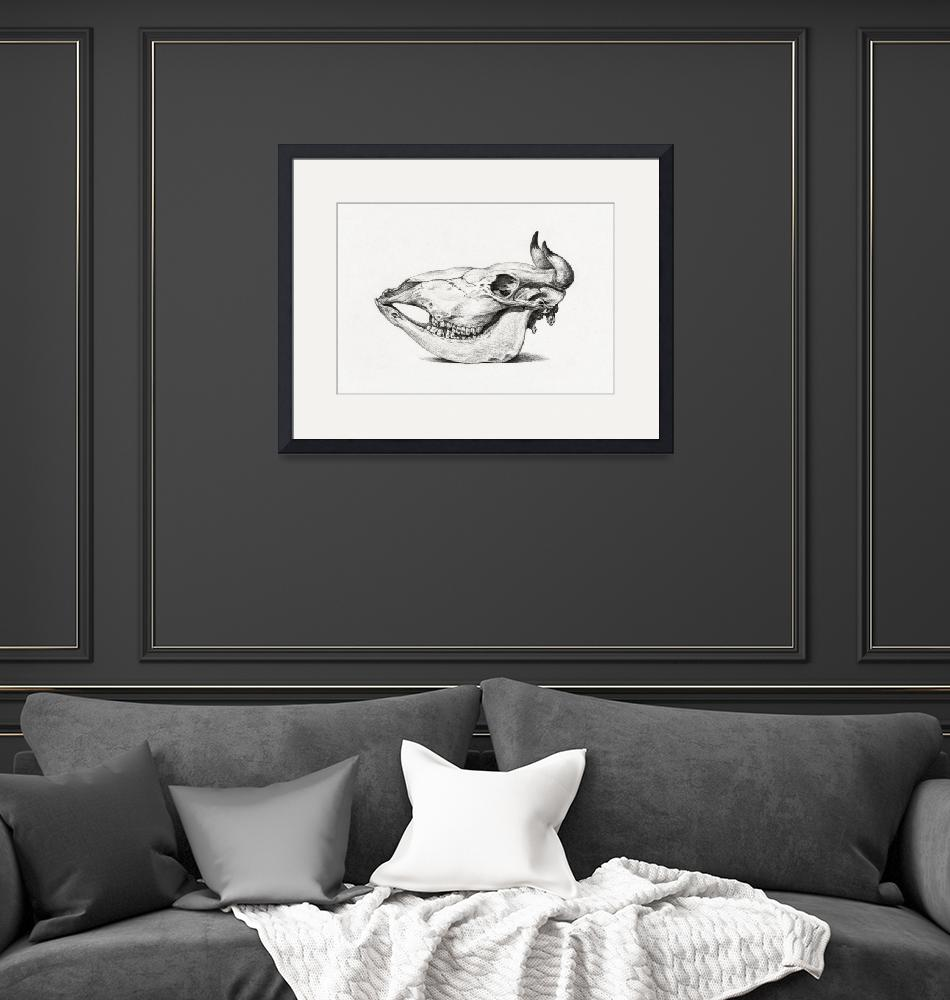"""Vintage Bull Skull Illustration""  by FineArtClassics"