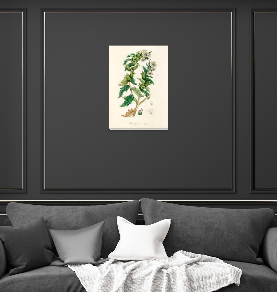 """Vintage Botanical Henbane""  by FineArtClassics"