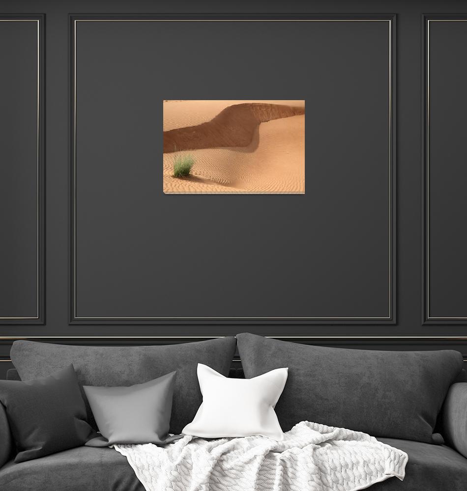 """Sand Patterns in the Desert 4""  (2007) by DonnaCorless"