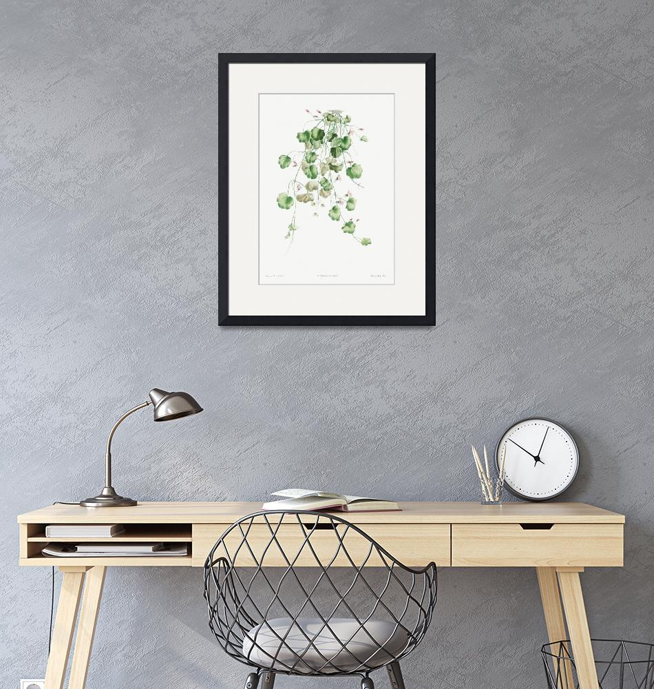 """Kenilworth Ivy Vintage Botanical""  by FineArtClassics"