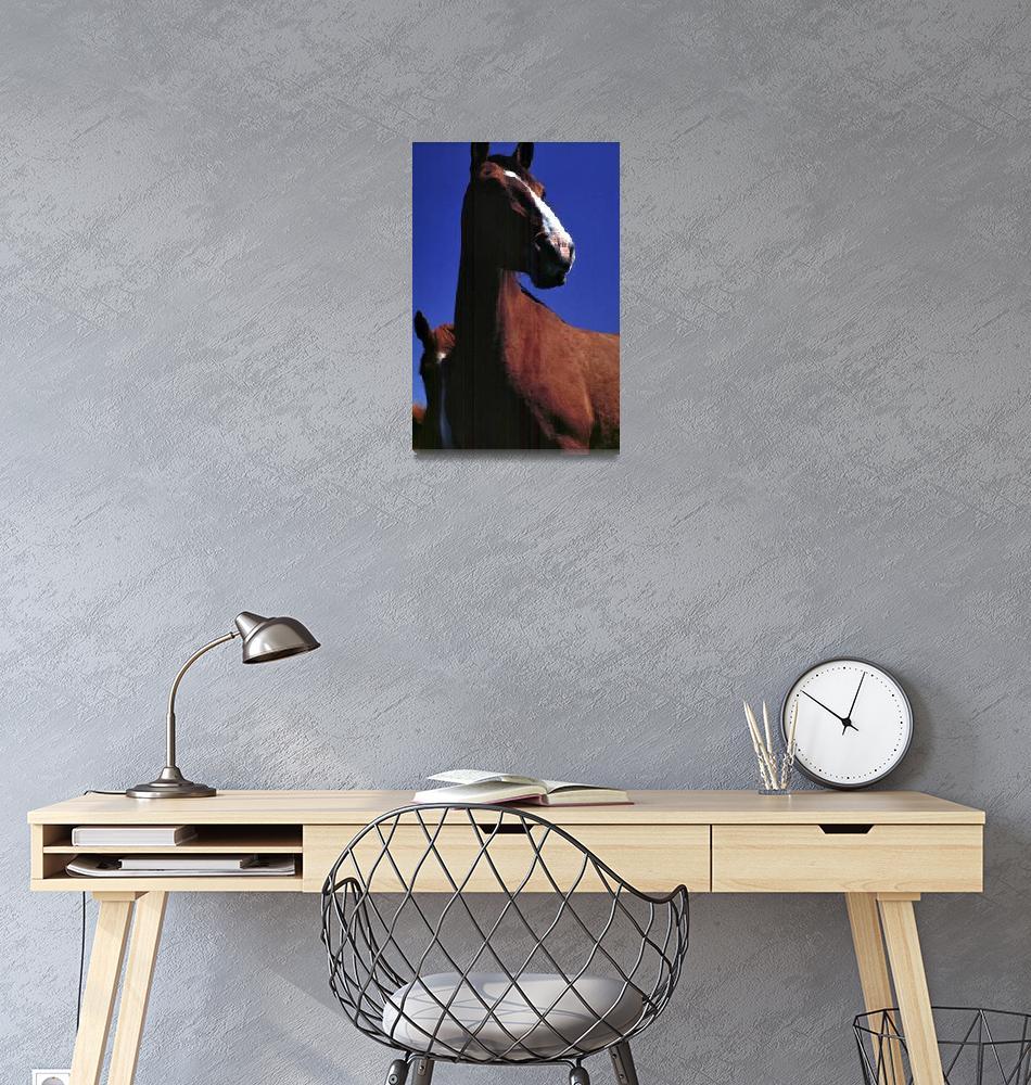 """Cavalos - Horses""  (1980) by JoaoPonces"