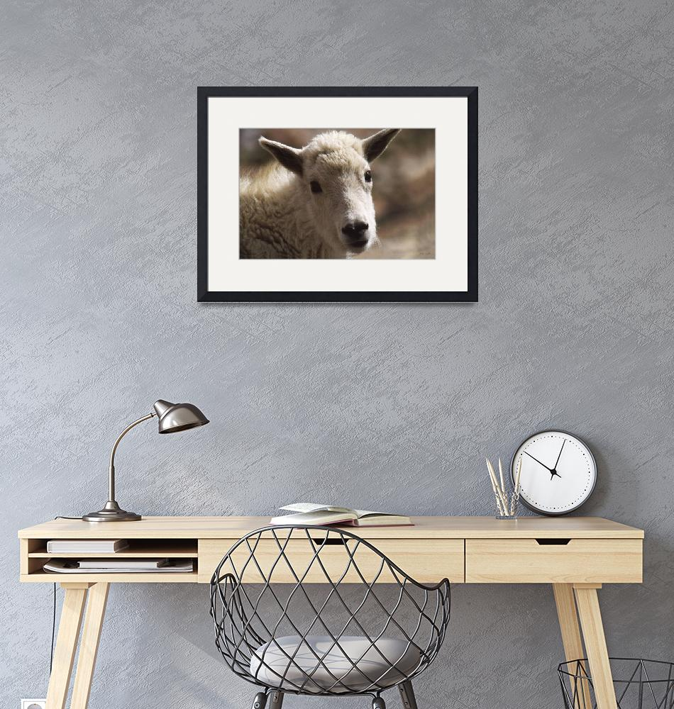 """""""A003-21 Mountain Goat Yearling""""  (2016) by Williamcastner"""