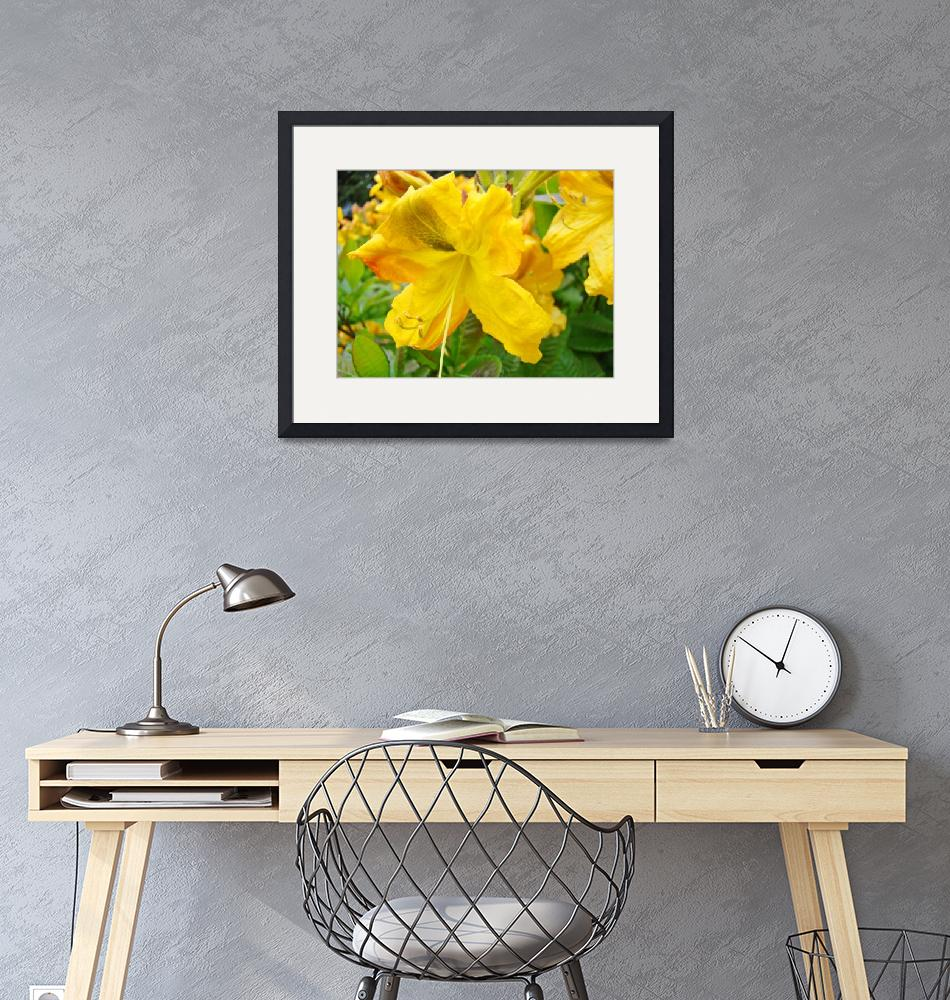 """Azaleas Art Print Yellow Azalea Flowers Rhodies""  (2009) by BasleeTroutman"