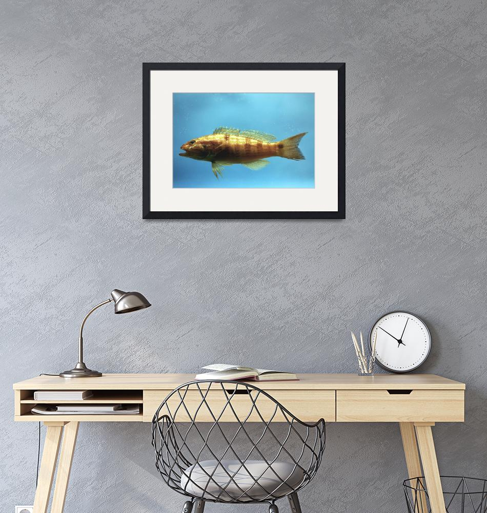 """""""Sand Perch Fish""""  by Alleycatshirts"""