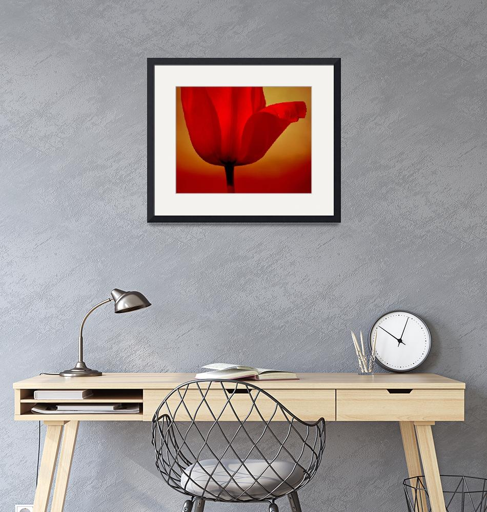 """""""Red Tulip""""  (2014) by joanhan"""