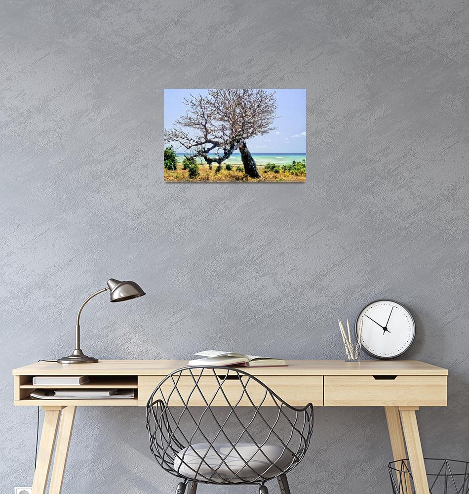 """""""A Tree With A View""""  (1991) by JoaoPonces"""