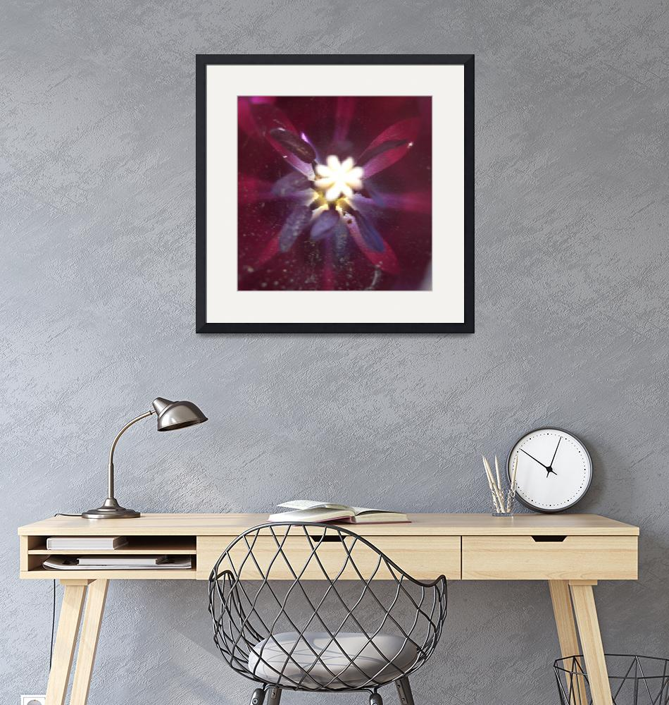 """Purple Tulip Star""  (2010) by EagleEyesDesign"